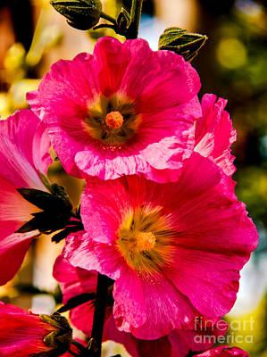 Designs Similar to Beautiful Pink Hollyhock