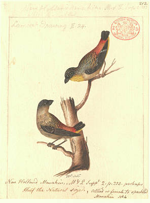 Designs Similar to Spotted Pardalote