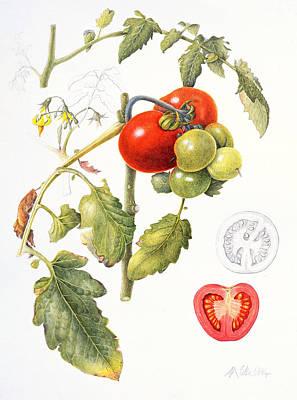 Designs Similar to Tomatoes by Margaret Ann Eden