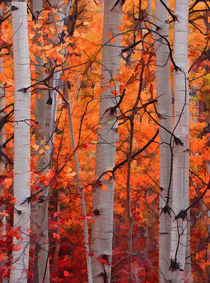 Aspens In Autumn Leaves Prints