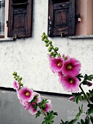 Designs Similar to Hollyhocks In Schierstein 1