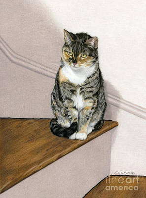 Domestic Short Hair Cat Paintings
