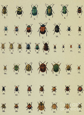 Designs Similar to Antique Insect Print