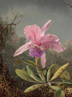 Designs Similar to Cattleya Orchid, 1871