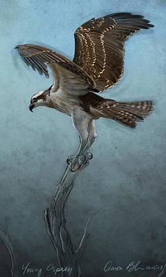 Osprey Digital Art