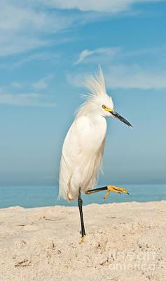 White Egret Photographs