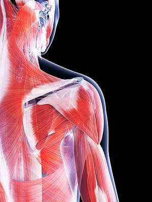 Designs Similar to Female Muscular System