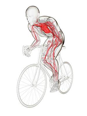 Designs Similar to Cyclist