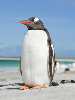 Islas Malvinas Art