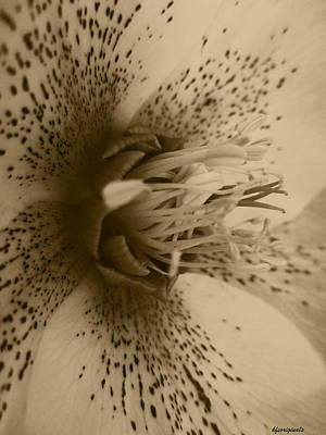 Kathy Spall: Flower Art