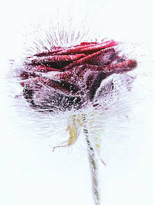Designs Similar to Icerose by Margit Lisa Roeder