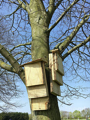 Designs Similar to Bat Boxes On A Tgreet Trunk 1