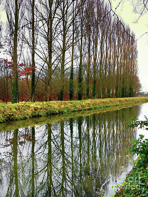 Designs Similar to Trees Reflected In Water