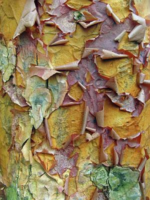 Colorful Bark Prints