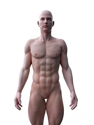 Designs Similar to Muscular Man