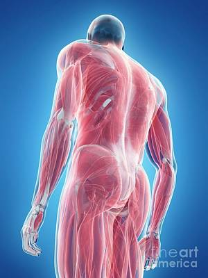 Designs Similar to Male Musculature 13