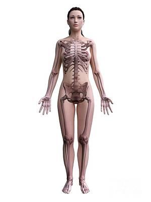 Designs Similar to Female Skeleton 17