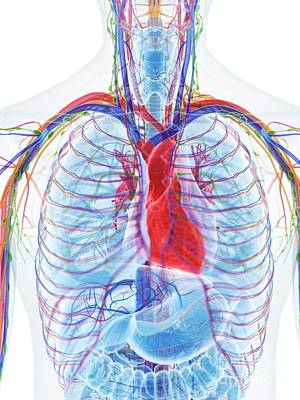 Designs Similar to Heart Anatomy