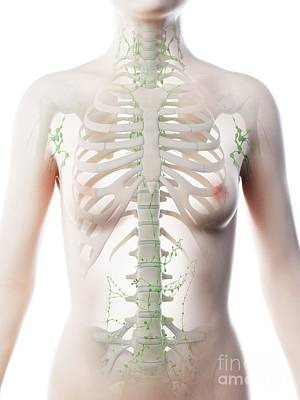 Designs Similar to Female Thoracic Lymph Nodes