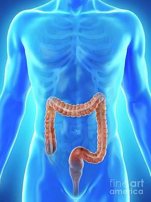 Designs Similar to Large Intestine