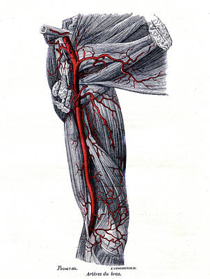 Designs Similar to Arteries Of The Arm