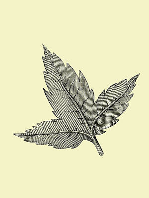 Designs Similar to Floating Leaf by Naxart Studio