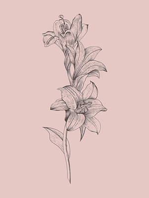 Designs Similar to Lily Blush Pink  Flower