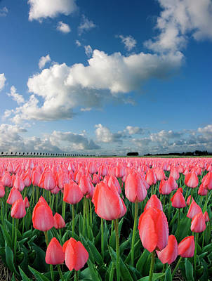 Designs Similar to Tulips And Sky by Jacobh
