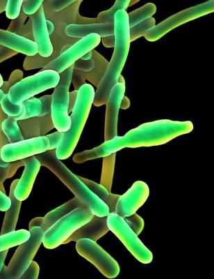 Designs Similar to Listeria Monocytogenes