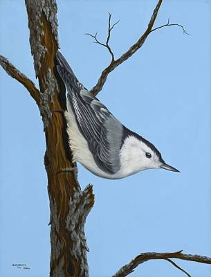 White-breasted Nuthatch Art