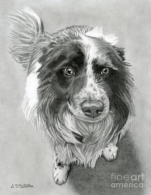 Collies Drawings