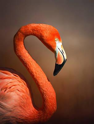 Flamingos Digital Art