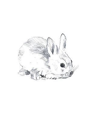Designs Similar to Sketched Rabbit IIi