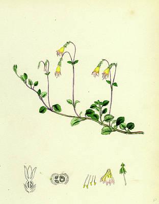 Botanica Drawings