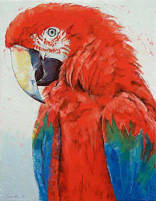 Scarlet Macaw Paintings