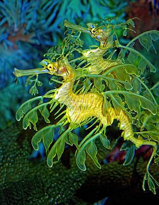 Seadragon Photographs