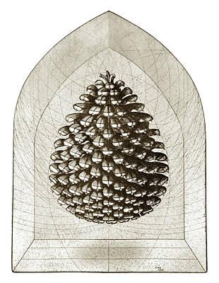 Fir Trees Drawings Prints