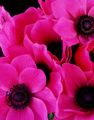 Designs Similar to Vibrant Pink Anemone Flowers