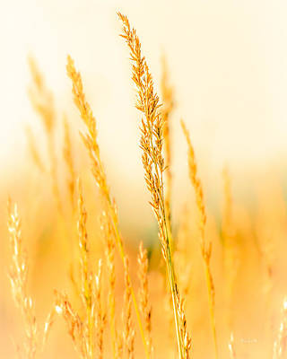 Sweet Grass Prints