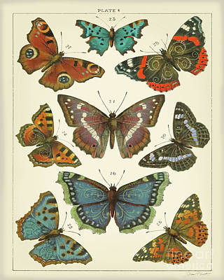 Designs Similar to Butterfly Plate 4 A
