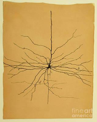 Brain Cell Art Prints