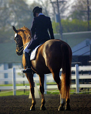 Sporthorse Posters