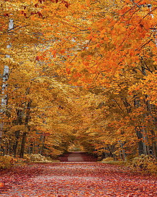 Designs Similar to Door County Fall Foliage