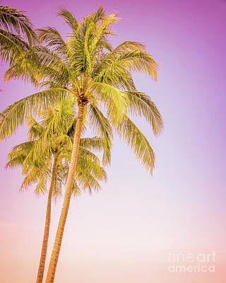 Designs Similar to Palm Trees And Pink Sky