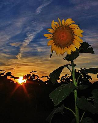 Photograph - State Flower and Sunset in Kansas by Greg Rud