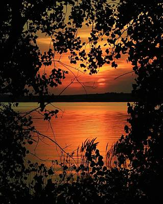 Photograph - Sunset Thru The Cottonwoods by Greg Rud