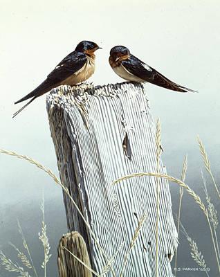 Barn Swallow Art Prints