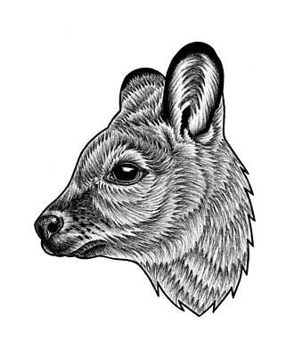 Herbivore Drawings