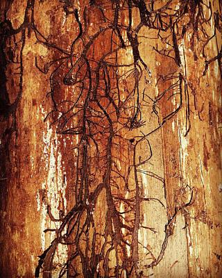 Firewood Photographs