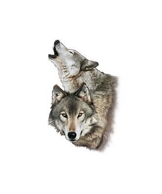Timberwolf Drawings
